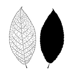 Graphic sheet vector