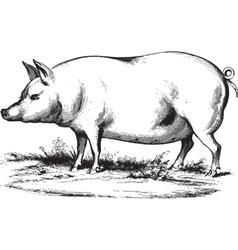 Swine 2 vector