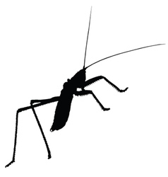 Strange insect silhouette vector