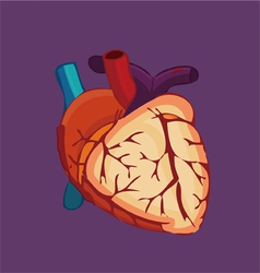 Human organ heart vector