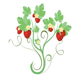 Strawberry plant with flowers vector