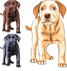 Cute puppy dog breed labrador retriever vector
