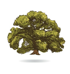 Tree drawing isolated vector