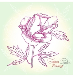 Green background with peony vector