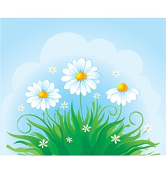 Summer background with daisy vector