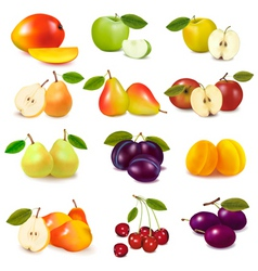 Group with different fruits vector
