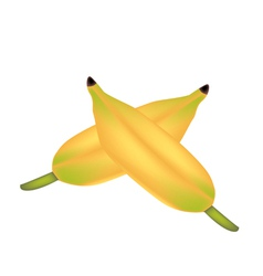 Two ripe asian banana on white background vector