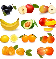 Group with sorts of fruit vector