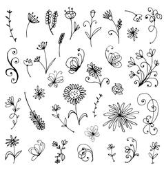 Sketch of floral elements for your design vector