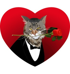 Heart shape cat and red rose vector