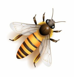 Bee download colorful vector