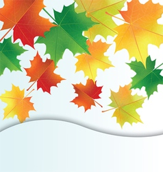 Autumn leaves on the white background vector