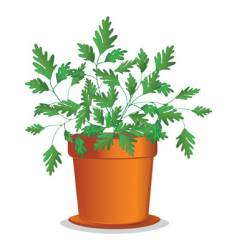 Parsley in pot vector