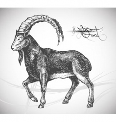 Goat hand drawn vector