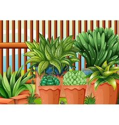 Pots with plants vector
