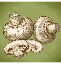 Engraving champignons retro vector