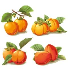 Set of ripe persimmon vector
