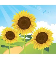 Sunflower landscape vector