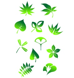 Nature leaves vector