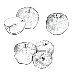 Ink apple sketches set vector