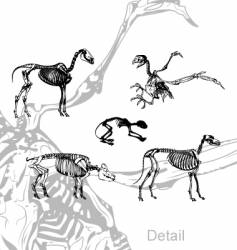 Animals skeleton vector