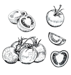Ink tomatoes sketches set vector