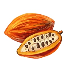 Picture of cacao vector