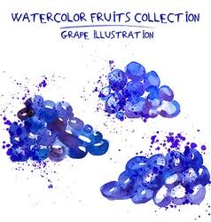 Hand drawn watercolor grape set vector