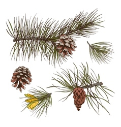 Pine branches colored print vector