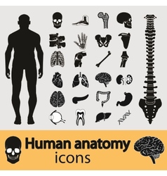 Human anatomy icons vector