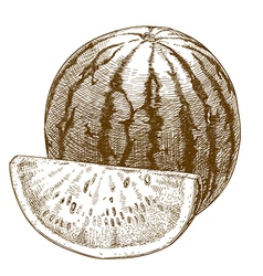 Engraving watermelon and slice vector