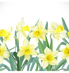 Lush yellow narcissus seamless background vector