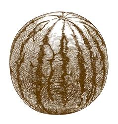 Engraving watermelon vector