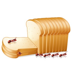 Bread and ants vector