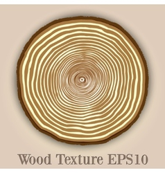 Wood texture background with tree rings vector