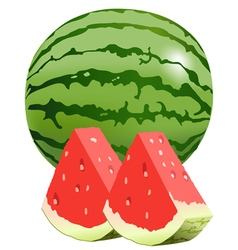 Watermellon vector