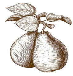 Engraving pear vector