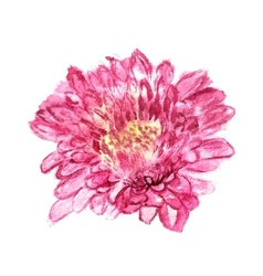 Chrysanthemum pink vector
