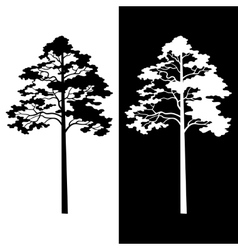 Pine trees black and white silhouettes vector