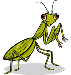 Mantis insect cartoon vector