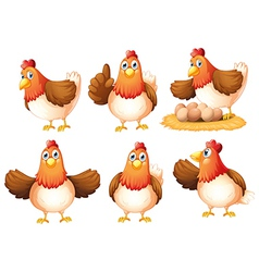 Six egg-laying hens vector