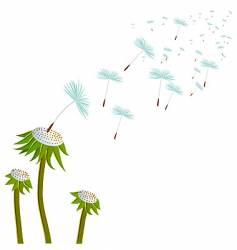 Three dandelions on the wind vector