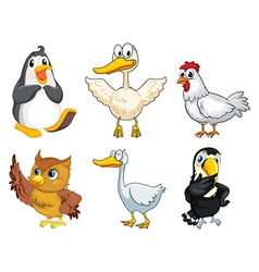 Six different kinds of birds vector