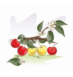 Sweet cherry vector