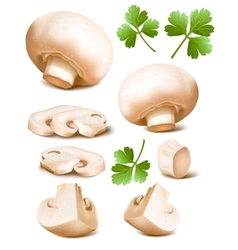 Mushrooms with parsley vector