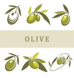 Olive and olive oil vector