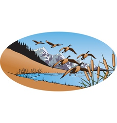 Canada geese 2 vector