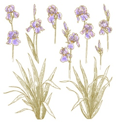 Collection of iris flowers vector