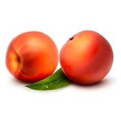 Two fresh peach vector