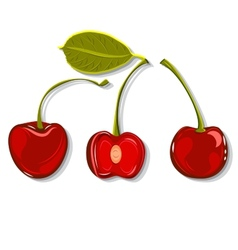 Hand-drawing juicy cherries vector
